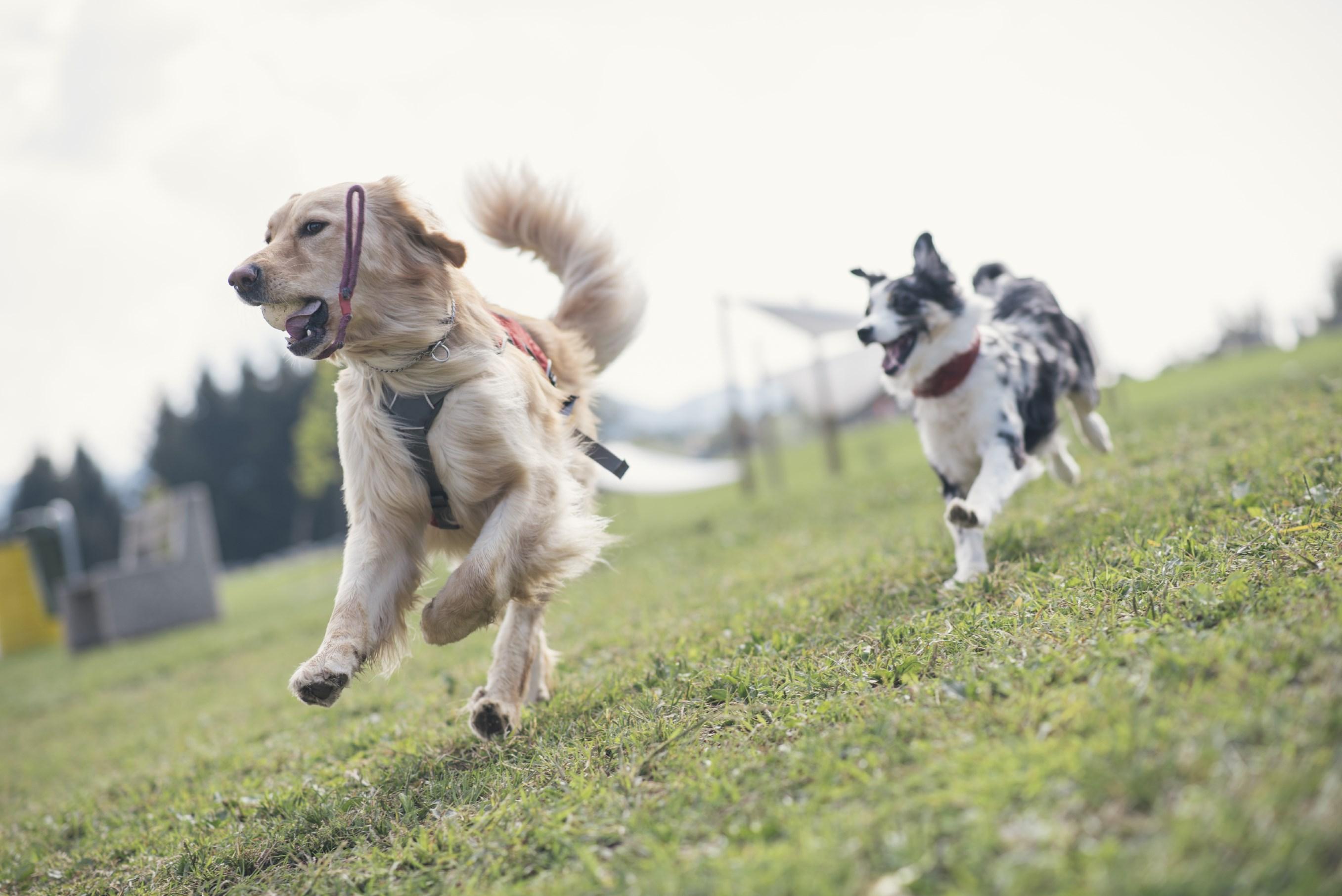 Coastal Paws Dog Training